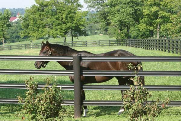 centaur cenflex fence brown vinyl horse fence35 vinyl