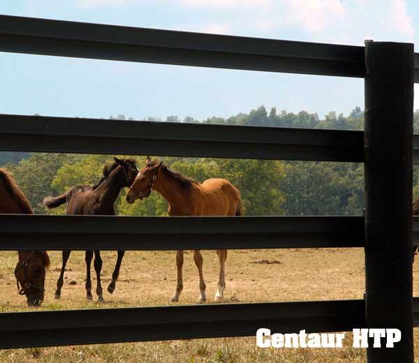 Horsefence Direct Centaur Htp Fence