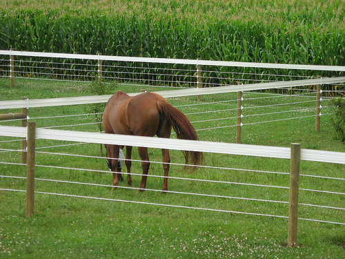 Horsefence Direct Centaur Polyplus Htp Fence