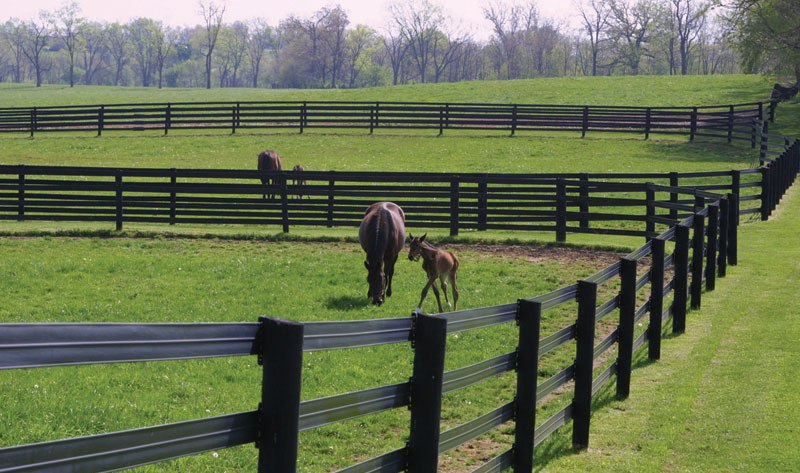 Horsefence Direct Centaur Hot Rail Fence