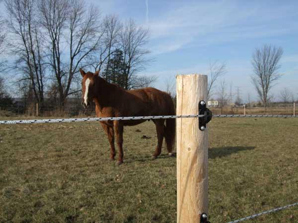 Horsefence Direct Electrobraid Fence